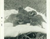 "Snapshot Photo ""The Raccoon Litter"" Wildlife Farm Ranch Country Animal Cute Baby Blurry Close Up Black & White Photograph Vernacular - 28"