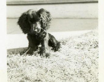 "Vintage Photo ""The Front Yard Boss"" Snapshot Antique Photo Old Black & White Photograph Found Paper Ephemera Vernacular - 183"