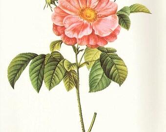 Marbled Rose art print vintage antique wall art pink flower art print Victorian art print antique rose art rose print prints 104