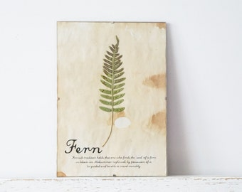 Pressed Herbs- Fern in Frame (1)