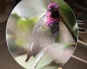 Round Glass Cutting Board  - Anna's Hummingbird Sitting - 8 inch