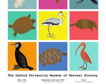 Print: Colourful animals from the Oxford Natural History Museum