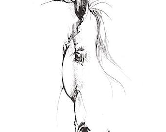 Original Federzeichnung eines Pferdes
