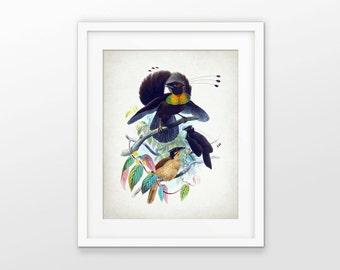 Bird Of Paradise Art Print - Bird Of Paradise Illustration - Bird Wall Art Poster - Ornithology Art - Single Print #2109 - INSTANT DOWNLOAD