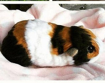 Needle Felt Guinea Pig- Lifesized tri colour. Pet portrait.