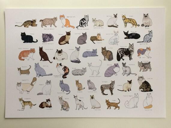 "Cat Breeds Print - 13""x19"""