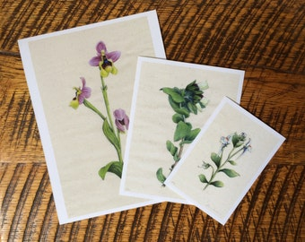 Wildflower Set, Limited Edition. Botanical Wildflower Archival Giclee. Set of 3 Prints.