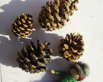 pine cone favours uk, natural dried cone, real pine cones, english pine cone, woodland wedding cones, wedding favors, elf kendal pine cone