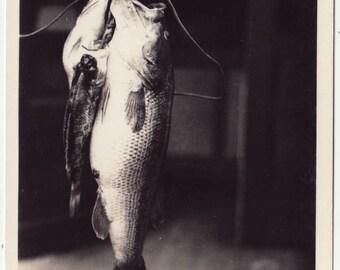 Real Photo Postcard Clear Lake 7 lb. Bass