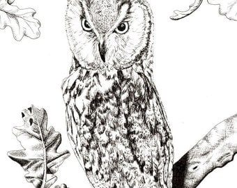 Black ink drawing of an owl (Glicee print of original) on paper