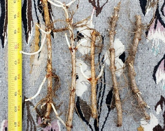 Organically Grown Hop Rhizomes-Seven Varieties