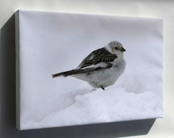 Canvas 16x24; Snow Bunting Bird