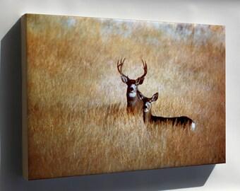 Canvas 16x24; Mule Deer - Copy