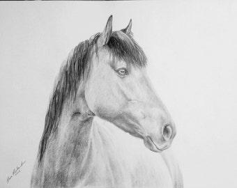 Wild horse. Original pencil drawing. A4 Free shipping