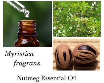 Nutmeg Essential Oil, 100% Pure Authentic Nutmeg EO