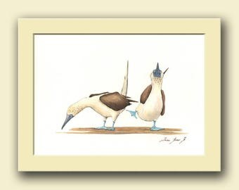 Blue Footed Bobbies - Bobby bird wildlife animal decor- sea bird wall art -marine bird artwork- Original watercolor painting- Juan Bosco