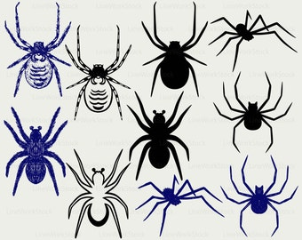 Spider clipart – Etsy