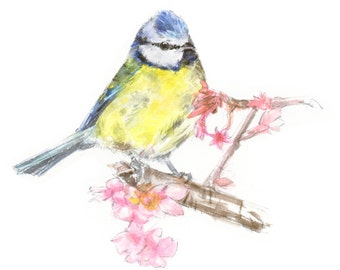 Blue tit - watercolor painting - bird watercolor painting - 5x7 inch print - 0101