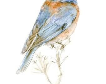 Western Bluebird watercolor painting - bird watercolor painting - 5x7 inch print - 0114