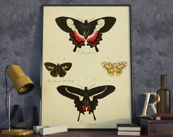 Butterfly Wall Print| Biology Wall Art| Insect Biology| Months Wall Art| Butterfly Wall Art| Entomology Gift| Science Wall Poster| HAP027