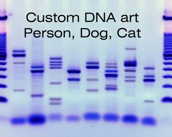 Dna Fingerprints Of Dogs And Cats