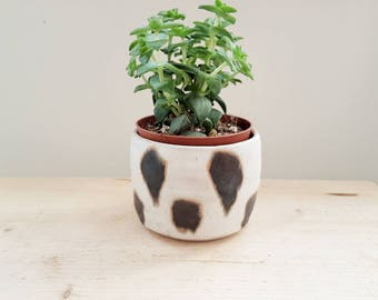 Animal Print Planter - succulent or cacti plant pot. Hand made and painted ceramics.
