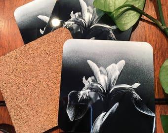 4 Coasters, northern forest, plants, wild flower photo, iris photo, blue flag photo, mushroom photo, fern photo, fiddle head fern photo