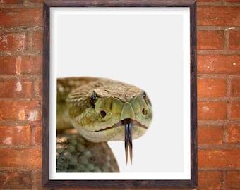 Southwestern Wall Art, Snake Art, Modern Art, Minimalist Print, Rattlesnake, Desert Photography, Boyfriend Gift, Wildlife Art, Rattlesnakes