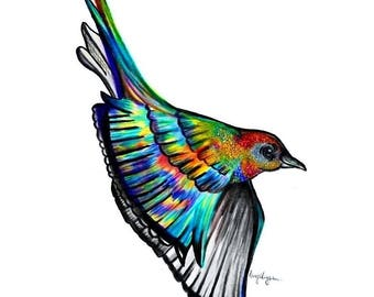 Paradise Bird Illustration Art Print - Pen and Ink and Coloured Pencil Traditional Art, Wildlife and Nature Artwork