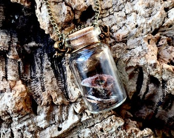 Mummified Crested Gecko Hatchling Necklace - Taxidermy - Odd - Curiosity