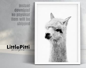 Alpaca print, nursery animal decor, alpaca photo, large printable poster, digital download, black and white animal print, nursery animal art