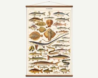 Vintage pull down chart fish  / poissons. High Quality Handmade vintage art