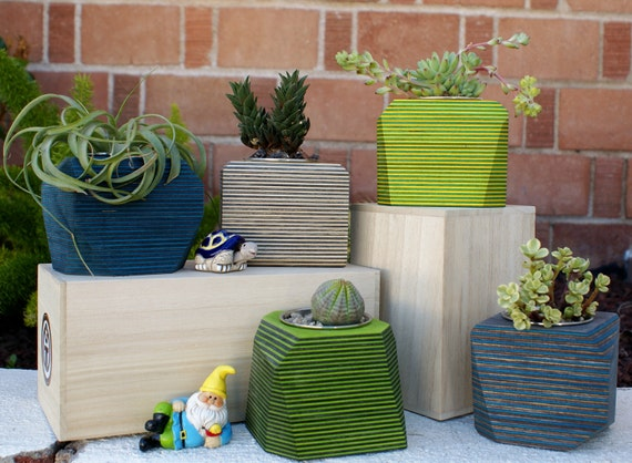 Skateboard Collection: Wood Geometric Planters for Succulents, Air Plants and Cactus