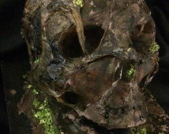 Horror Skull Australian Art Sculpture Evil Zombie Halloween Prop Creepy Horreur