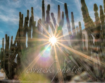 Cactus and Sun Rays