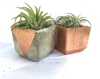 Rose Gold Air Plant Planter