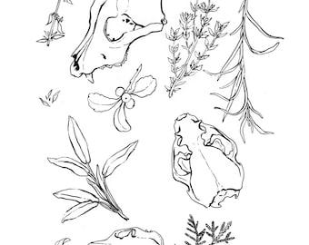 Skulls Herbs Drawing Art Print Pen and Ink Sketch Home Decor Wall Hanging Illustration Minimalist