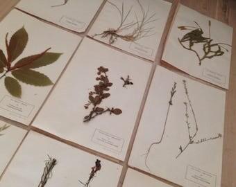 Herbarium set #8
