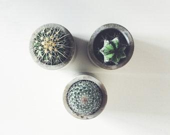 3 x Concrete Succulent / Cactus Planters / Handmade Plant Pots / For Air Plants
