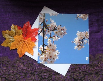 Greetings Card - Blank. Blue Sky and Blossom Photograph