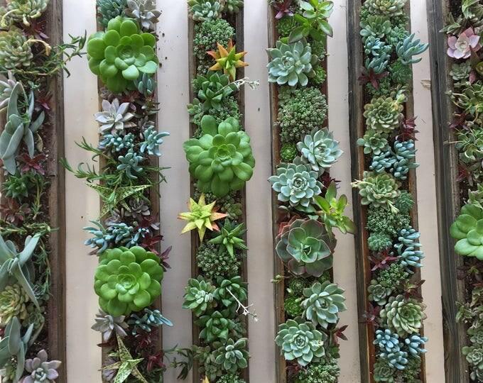"4""x32"" Succulent planter Box"