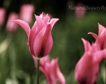 Purple tulips art print, flower photograph, nature photography, floral wall art, purple decor, fine art photo,flower gardens,tulip picture