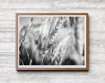 Summer Detail, Nature Photography, Minimal Photography, Black and White Print Download, Wheat Detail, Summer Breeze, Home Office Hotel Decor
