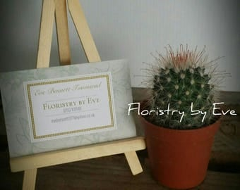 Cacti, Plants, indoor Plants, house Plants, Live Plants, Green Gifts, Floristry by Eve