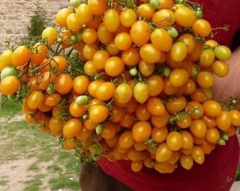 Tomato 'Ildi' (35 SEEDS)