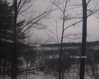 Misty Vale, forest, woods, countryside, tree, trees, snow, winter, landscape, original art, upstate New York