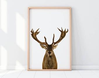 Deer, Antler, Deer Close Up, Deer Art, Deer Printable, Deer Print, Gorgeous Deer, Deer Antlers, Deer Art Print, Instant Download, Home Decor