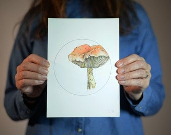 Colour pencil illustration of a toadstool