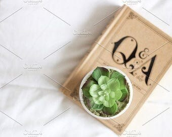 Styled Stock Photo | Succulent On Book | Blog stock photo, stock image, stock photography, blog photography