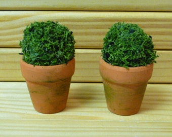 Two Dolls House Miniature Topiary Trees in Aged Terracotta Pots